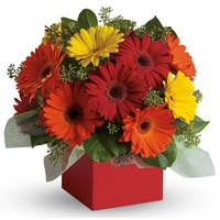 Glorious Gerberas - Flower Arrangement